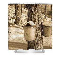 Maple Sap Buckets Shower Curtain by Edward Fielding