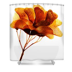 Maple Seed Pod Cluster Shower Curtain