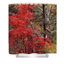 Maple Sycamore Pine-h Shower Curtain