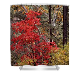 Maple Sycamore Pine Shower Curtain