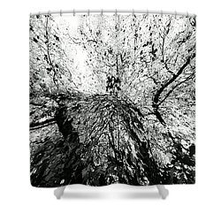 Maple Tree Inkblot Shower Curtain by CML Brown