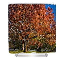 Maple Trees Shower Curtain by Brian Jannsen
