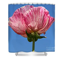 Marbled Mable Ranunculus Flower By Diana Sainz Shower Curtain