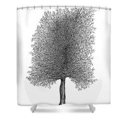 March '12 Shower Curtain