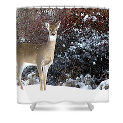 March Snow And A Doe Shower Curtain
