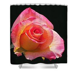 Mardi Gras Floribunda Rose Shower Curtain by Rona Black
