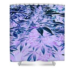 Marijuana Dreams  Shower Curtain