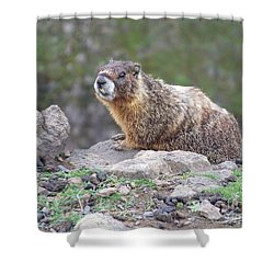 Shower Curtain featuring the photograph Marmot On The Edge by Charles Robinson