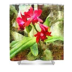 Maroon Cattleya Orchids Shower Curtain by Susan Savad
