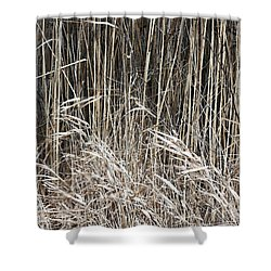Shower Curtain featuring the photograph Marsh Grasses 3 by Mary Bedy