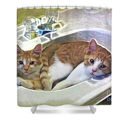 Mary's Cats Shower Curtain by Joan  Minchak