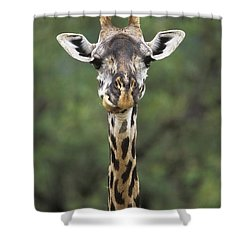 Masai Giraffe Serengeti Np Shower Curtain by Konrad Wothe