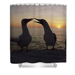 Masked Booby Couple Courting Galapagos Shower Curtain by Konrad Wothe