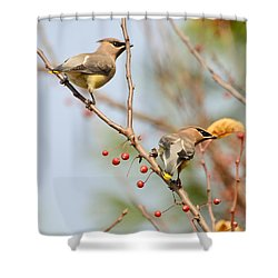 Shower Curtain featuring the photograph Masked Duo by Kerri Farley