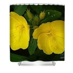 Shower Curtain featuring the photograph Matching Pair by Sara  Raber