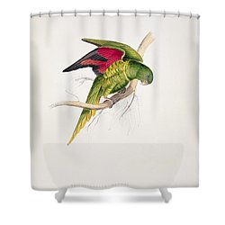 Matons Parakeet Shower Curtain by Edward Lear