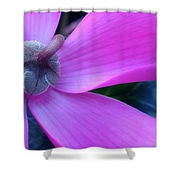 Mauve Cyclamen Shower Curtain by Kaye Menner