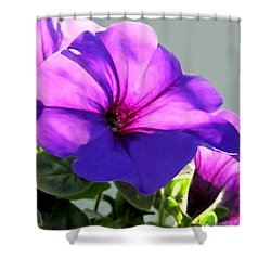 Mauve Petunia Trio Shower Curtain by Danielle  Parent
