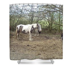 May Hill Ponies 1 Shower Curtain