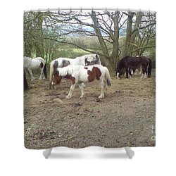 May Hill Ponies 2 Shower Curtain
