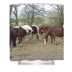 May Hill Ponies 3 Shower Curtain