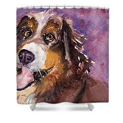 May The Mountain Dog Shower Curtain