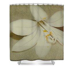 Maybelline Shower Curtain by Elaine Teague
