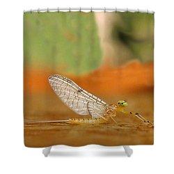 Mayfly Art Shower Curtain