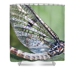 Mayfly Shower Curtain by Richard Thomas