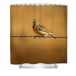 Meadowlark And Barbed Wire Shower Curtain by Robert Frederick
