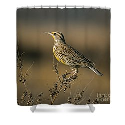 Meadowlark On Weed Shower Curtain by Robert Frederick