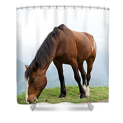 Meal Time Shower Curtain by Yew Kwang