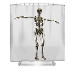 Medical Illustration Of Full Female Shower Curtain by Stocktrek Images