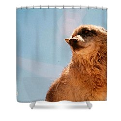 Medicine Wolf Shower Curtain