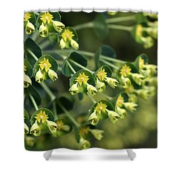 Mediterranean Spurge Shower Curtain by Joy Watson