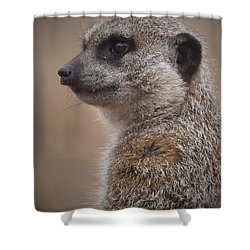 Meerkat 9 Shower Curtain