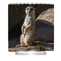 Meerkat Looking Forward Shower Curtain