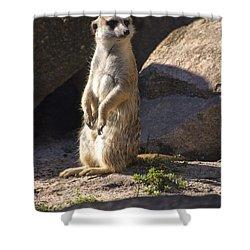 Meerkat Looking Left Shower Curtain by Chris Flees