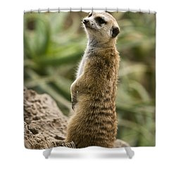 Shower Curtain featuring the photograph Meerkat Mongoose Portrait by David Millenheft