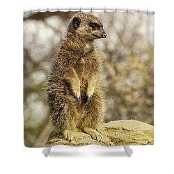 Meerkat On Hill Shower Curtain