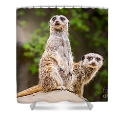 Meerkat Pair Shower Curtain