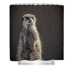 Meerkat Sentinel Shower Curtain
