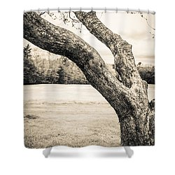 Meet Me Under The Old Apple Tree Shower Curtain by Edward Fielding