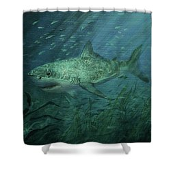 Megadolon Shark Shower Curtain by Tom Shropshire