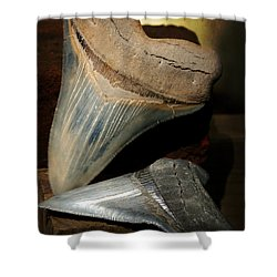 Megalodon Fossil Shark Teeth Shower Curtain