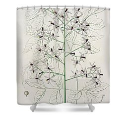 Melia Azedarach From 'phytographie Medicale' By Joseph Roques Shower Curtain by L F J Hoquart