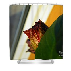 Shower Curtain featuring the photograph Mellow Mourning by Brian Boyle
