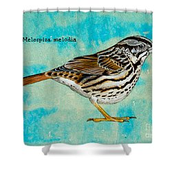 Melospiza Melodia Shower Curtain