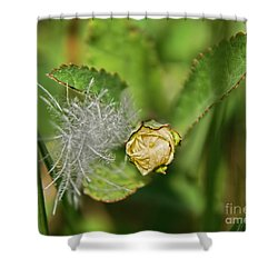 Shower Curtain featuring the photograph Memories by Olga Hamilton