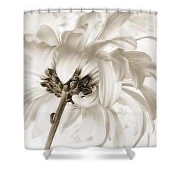 Merengue Rhythm Shower Curtain
